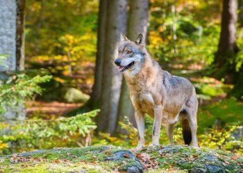 Nationalpark_bayerischer_wald-40