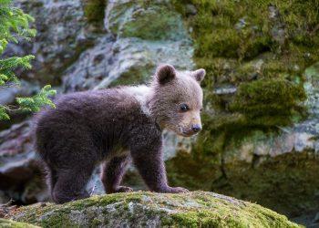 Nationalpark_bayerischer_wald-10