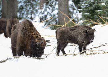 Nationalpark_bayerischer_wald-41