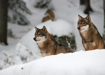 Nationalpark_bayerischer_wald-5
